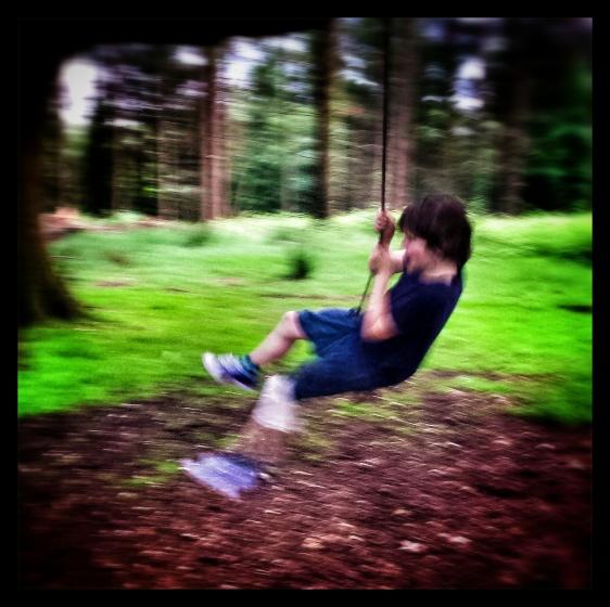 A fabulous tree swing